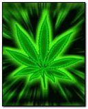 Marijuana au néon