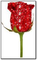 लाल गुलाब 1