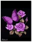 Roses butterfly animat