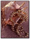 Shell with necklace