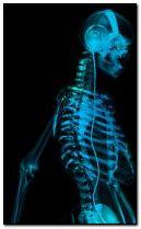 skeleton 240x400