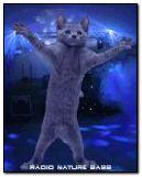 khiêu vũ mèo