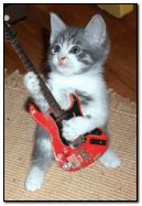 Music kitten