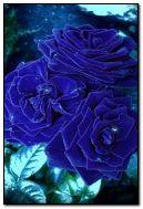 ब्लू गुलाब