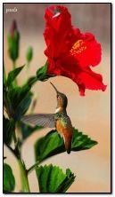 ดอกไม้และนกฮัมมิ่งเบิร์ด