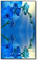 blue-orchid-over-the-water