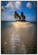 열대 섬 2