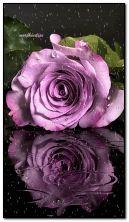 Ungu Rose
