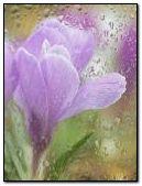 flower & rain