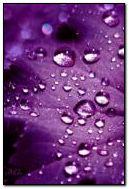紫色的梦想