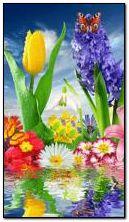Blumen Farben