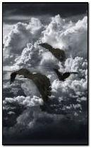 COOL birds 240x400