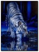 Tiger in blue and white