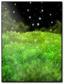 Bubbles (R10)