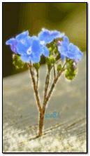 Mavi çiçek
