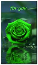 green rose for you
