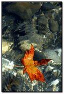 ?utumn leaf