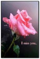 грустная роза