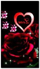 गुलाब प्यार 2
