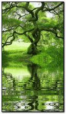 निसर्ग पाणी