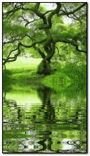 Nature Water