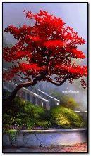 Czerwone drzewo
