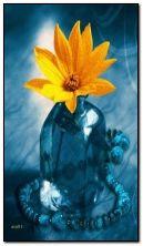 Hoa trong bình