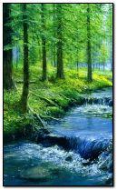 Río del bosque