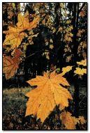 शरद ऋतूतील वन