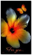 सौर फूल