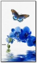 orchids and butterfly
