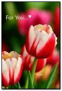 สำหรับคุณ.!