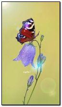 फूल पर तितली