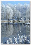 ニースの冬
