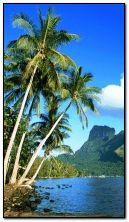 Chế độ xem Tropic