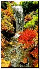 cachoeira do outono