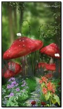 Toadstool Nature