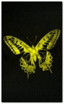 yellow butterfly 240x400