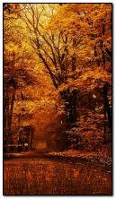 Natureza outono