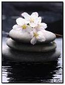 Flowers on stones