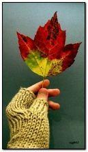 Sonbahar yaprağı