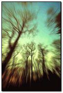 forest dizzy