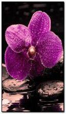 Orquídea en las rocas