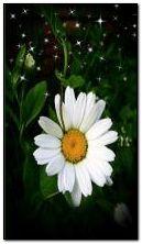 ดอกไม้ 7