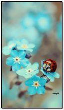 biedronka i kwiaty