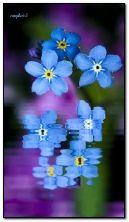 私は花を忘れない