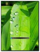 Vista-Rain