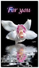 orchidea per te