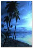 Night Beach 2
