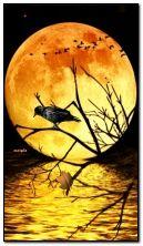 luna e corvo